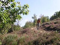 Le Tour du Mont Aigoual