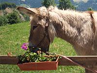 Avec un âne dans le parc de la Chartreuse.