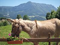 Rando avec un âne en Chartreuse