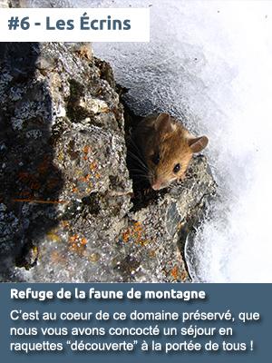 #6 – Le Parc National des Écrins, refuge de la faune de montagne